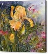 Yellow Iris With Bleeding Hearts Acrylic Print