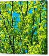 Yellow ... Acrylic Print