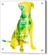 Yellow Lab Acrylic Print