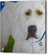 Yellow Labrador Retriever Original Acrylic Painting Acrylic Print