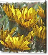 Yellow  Acrylic Print by Laurianne Nash