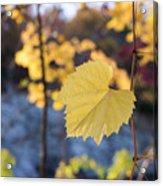 Yellow Leaf Newton Upper Falls Fall Foliage Acrylic Print