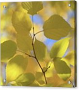 Yellow Leaves. Acrylic Print