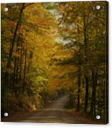 Yellow Leaves Road Acrylic Print