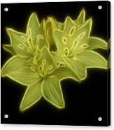 Yellow Lilies On Black Acrylic Print by Sandy Keeton
