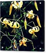 Yellow Lilies In Fort Tryon Park Acrylic Print