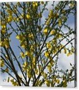 Yellow Little Flowers Acrylic Print