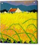 yellow Meadow Ireland Acrylic Print