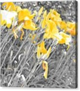 Yellow Moment In Time Acrylic Print