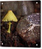 Yellow Mushroom Acrylic Print