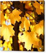 Yellow Nature Tree Leaves Art Prints Bright Baslee Troutman Acrylic Print