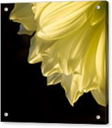 Yellow On Black Acrylic Print by Ron Hoggard