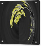 Yellow On Gray 2 Acrylic Print