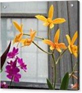 Yellow Orange And Purple Flowers Acrylic Print
