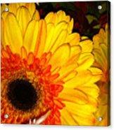 Yellow-orange Acrylic Print