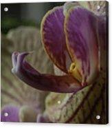 Yellow Orchid Acrylic Print