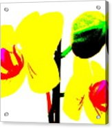 Yellow Orchids Abstract Acrylic Print