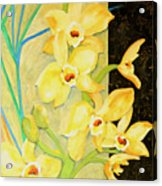 Yellow Orchids With Black Screen Acrylic Print