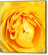 Yellow Petals Acrylic Print by Cathie Tyler