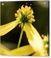 Yellow Pollinate Acrylic Print