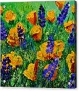 Yellow Poppies 560190 Acrylic Print