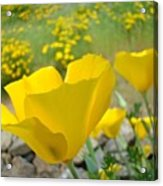 Yellow Poppy Flower Meadow Landscape Art Prints Baslee Troutman Acrylic Print