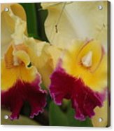 Yellow Purple Orchids Acrylic Print