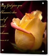 Yellow-red Rose-p045 Acrylic Print