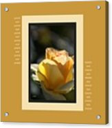 Yellow Rose Bud Dreams With Design Acrylic Print