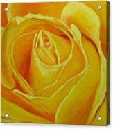 Yellow Rose Close Up Acrylic Print