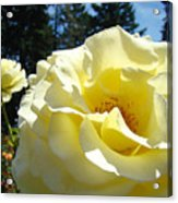 Yellow Rose Garden Landscape 3 Roses Art Prints Baslee Troutman Acrylic Print