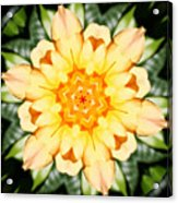 Yellow Rose Kaleidoscope  Acrylic Print