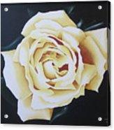 Tea Rozsa Acrylic Print