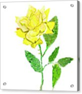 Yellow Rose, Painting Acrylic Print
