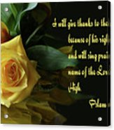 Yellow Rose Ps.7 V 17 Acrylic Print