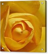Yellow Rose Art Acrylic Print