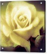 Yellow Rose Smoky Misty Look Acrylic Print