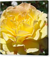 Yellow Rose Sunlit Summer Roses Flowers Art Prints Baslee Troutman Acrylic Print