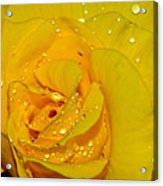 Yellow Rose With Droplets By Kaye Menner Acrylic Print