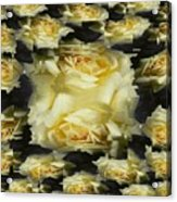Yellow Roses 2 Acrylic Print