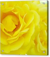 Yellow Roses Art Prints Botanical Giclee Prints Baslee Troutman Acrylic Print