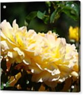 Yellow Roses Sunlit Rose Flowers 1 Rose Garden Giclee Artwork Baslee Troutman Acrylic Print
