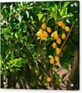 Yellow Seeds Acrylic Print