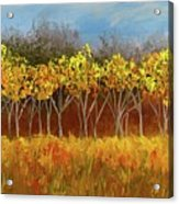 Yellow Stand Of Trees Acrylic Print