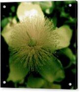 Yellow Star Acrylic Print
