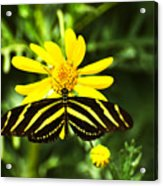 Yellow Stripes on Yellow Flower Acrylic Print