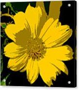 Yellow Sunshine Work Number 8 Acrylic Print