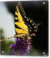 Yellow Touch Acrylic Print