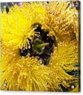 Yellow Tree Flower Acrylic Print