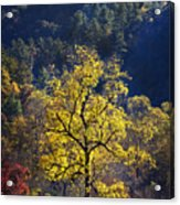Yellow Tree In Sunlight Acrylic Print